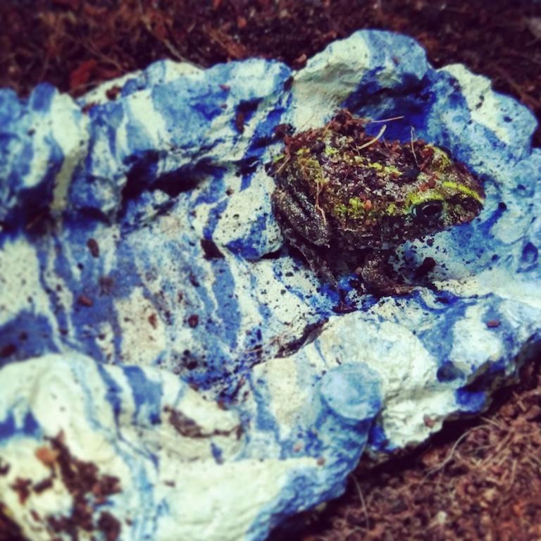 Pixie Frog - $39.99